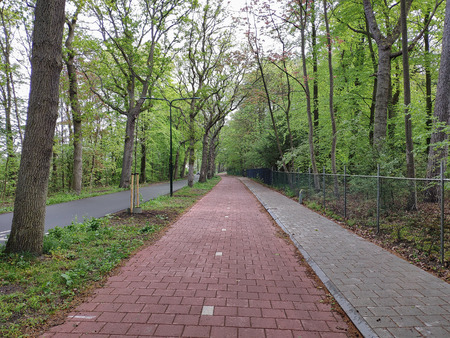 Bicycle lane along the road for cars in the par