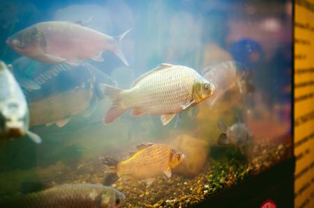 river commercial fish in the aquarium, agricultural achievements