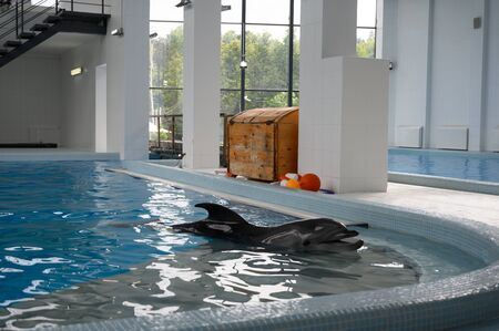 Bottle-nosed dolphin poses in the pool sea water. positive emotions, communication with marine mammals 版權商用圖片