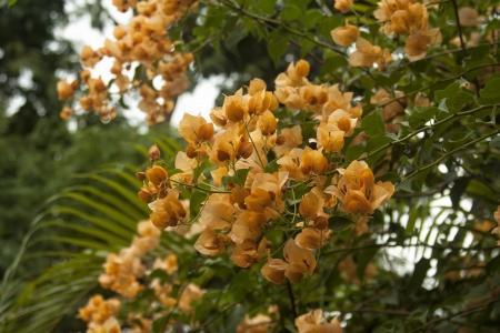 flores exoticas: Asi�ticos flores ex�ticas