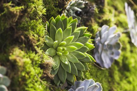 living wall of plants, natural green