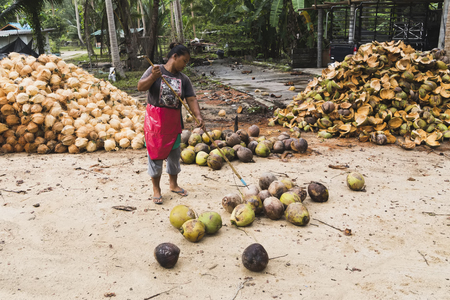 Coconuts from the village of rural labor in Thailand, Koh Phangan, april 15, 2015 Stock Photo - 80137940