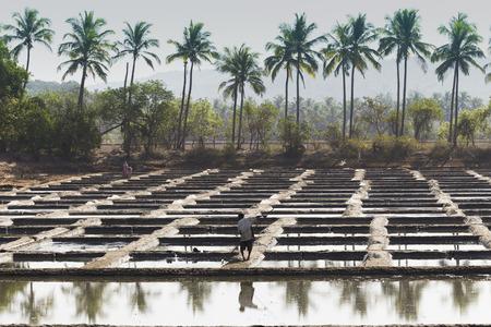 Baden met zoutzoutextractie voedselindustrie India, Goa, 11 maart 2017 Redactioneel