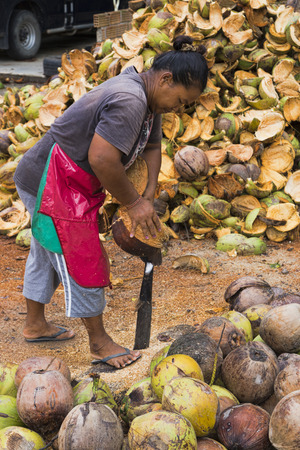 Thailand, Koh Phangan, April 14, 2015. Secretly at work collecting coconuts on a coconut plantation Editorial