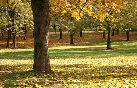 purk in autumn photo