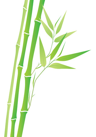 bamboo frame: bamboo branches