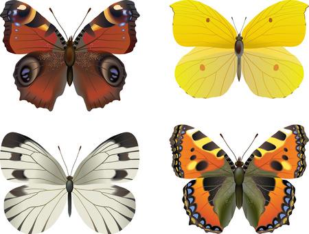 現実的な蝶のセット: 白い蝶 (オオモンシロチョウ) 硫黄 (Rhodocera Gonopteryx rhamni)、べっ甲ヴァネッサ (ナミハダニ) 欧州孔雀 (Inachis io)