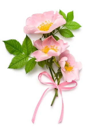 Dog rose (Rosa canina) flowers with pink ribbon on a white background Zdjęcie Seryjne - 14562289