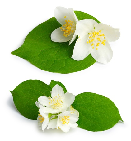 Beautiful flowers of jasmine (mock-orange, Philadelphus) on the white background