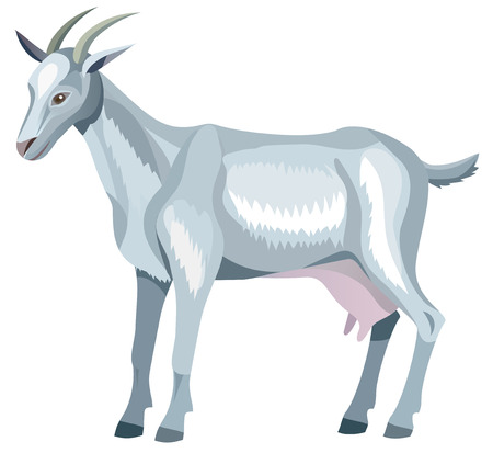 capra: gray goat with horns - vector illustration