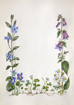 sorrel: botanical water color frame from violet, camomile, bellflower, periwinkle, wood sorrel