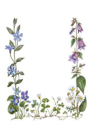 wood sorrel: bot�nico marco de color agua de violeta, manzanilla, Bellflower, b�garo, acedera