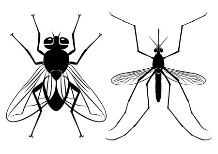 dipterus: illustration - silhouettes of a fly and mosquito