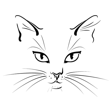 Muzzle of a cat with whisker - a vector illustration