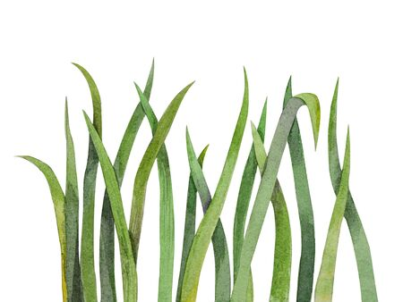 Green grass elements, watercolor illustration