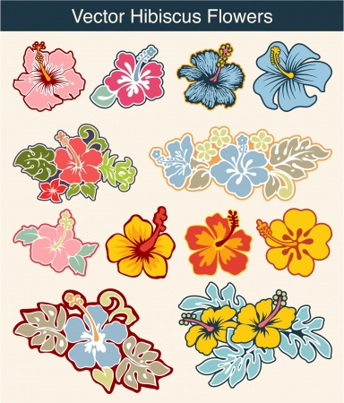 Vector colored  hibiscus flowers