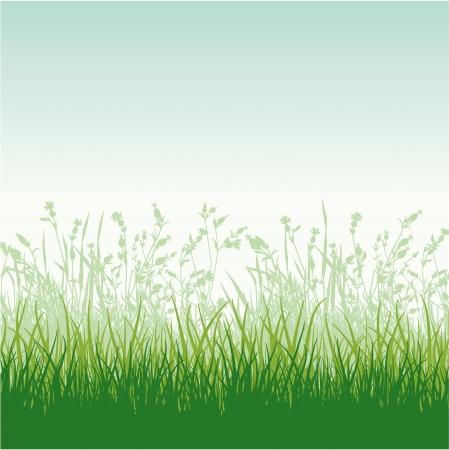 Grassy meadow vector  wallpaper