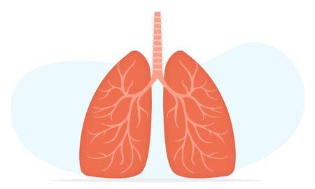 Lungs vector style illustration, human trachea Ilustração