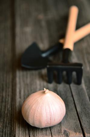 cranny: Garlic on gray board