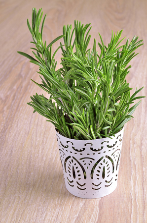 sprigs: Many green lush sprigs fresh rosemary together