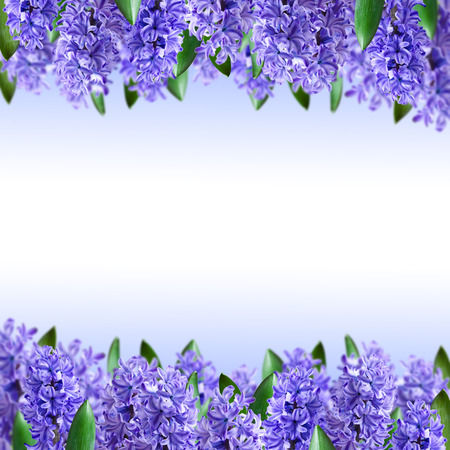 hyacinths: Floral background and a bouquet of hyacinths Stock Photo