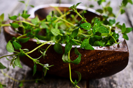 water thyme: Sprigs of raw thyme with drops of water in a wooden bowl on a wooden surface