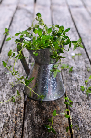 water thyme: Sprigs of raw thyme with drops of water in a metal container on a wooden surface
