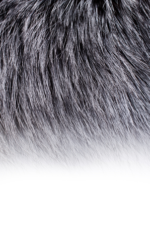 Backgrounds include the long dark animal fur. Selective focus.