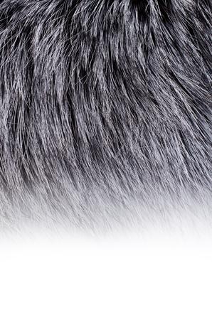 macro animals: Backgrounds include the long dark animal fur. Selective focus.