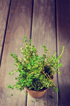 turba: Sprouts fresh thyme in a peat pot on a wooden background. Selective focus. Foto de archivo