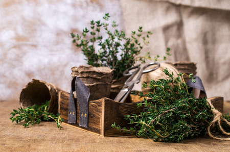 Branches of raw thyme on a wooden background box and peat pots. Selective focus.