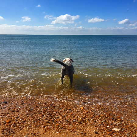 pebles: Dog getting ready for a swim