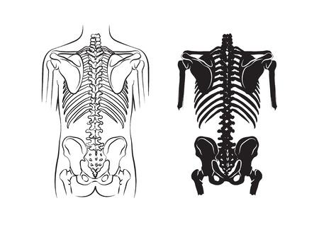 chest pain: human bone, anatomy Illustration