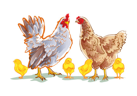 chicken family 矢量图像