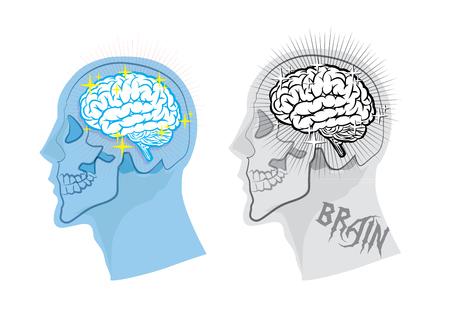 eye sockets: brain anatomy