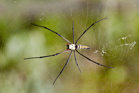 formidable: Big spider stretched fibers in the open look very formidable