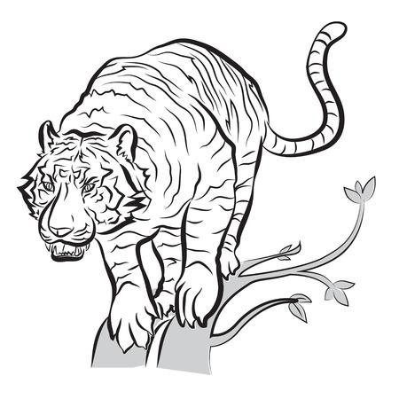 tiger will jump action