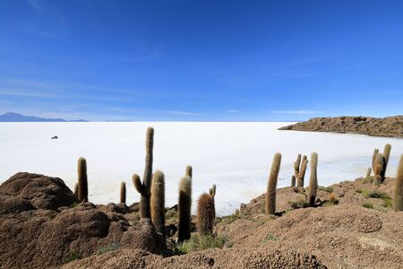 View of the Salar de Uyuni salt desert from the Incahuasi island overgrown with cactuses in Bolivia