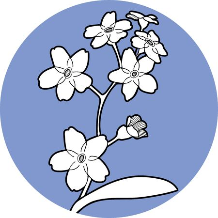 Forget me not flawers in circle hand draw