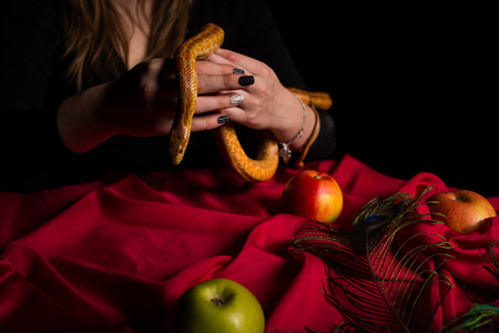 A girl dressed in black is holding a snake above a table with apples Фото со стока
