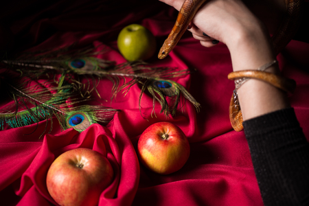The snake in the witch's hands over poisoned apples Фото со стока
