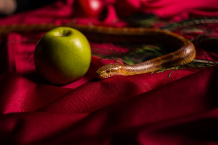 The serpent tempter on the table with apples Stock Photo