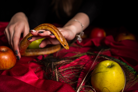 The snake crawls on the witch's table Фото со стока