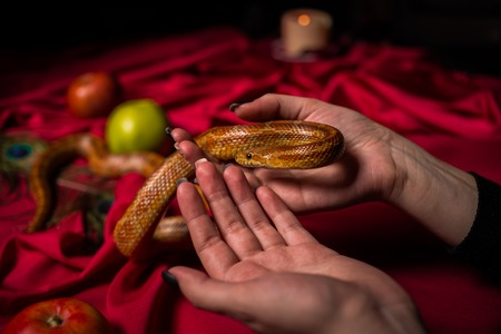 The serpent curved in the hands of the priestess on the ritual table