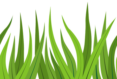 grass blades: Vector illustration  of a green grass on white Illustration