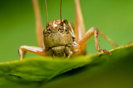 Grasshopper eating on a plant eating a leaf