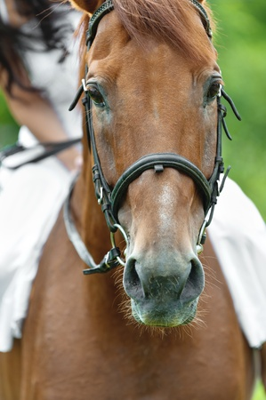 caresses: snout brown horse rider