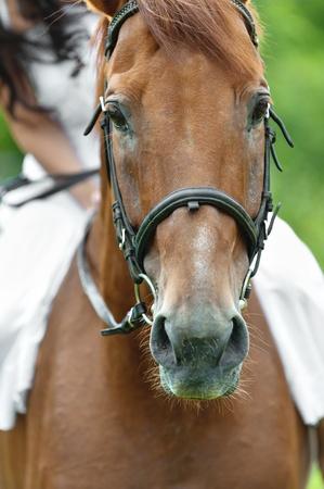 snout: snout brown horse rider