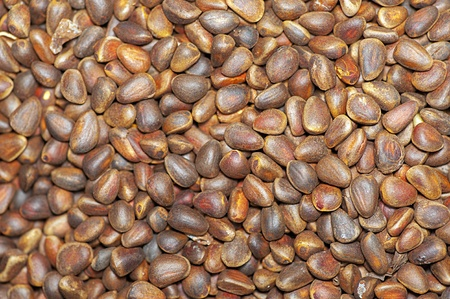 viands: Close up background of pine nuts in skin.