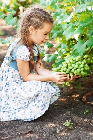 Beautiful little girl with pigtails holding bunch of grapes in summer green garden, profile. Stock Photo - 15464940